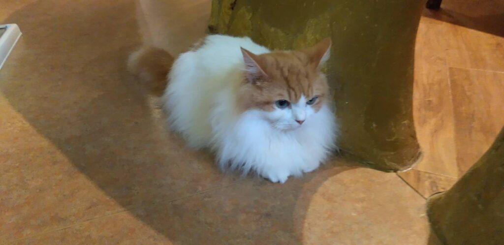 吉祥寺のCat Cafe『てまりのおしろ』で可愛い猫と戯れる喜び
